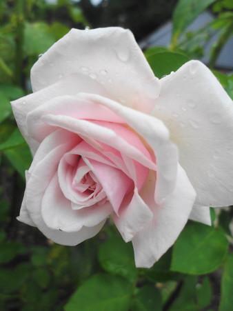 スブニール ドゥ ラ マルメゾン秋の花