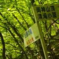 緑の山行き