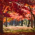 赤くなる木々