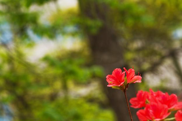 Photos: 花と木