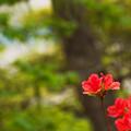 写真: 花と木