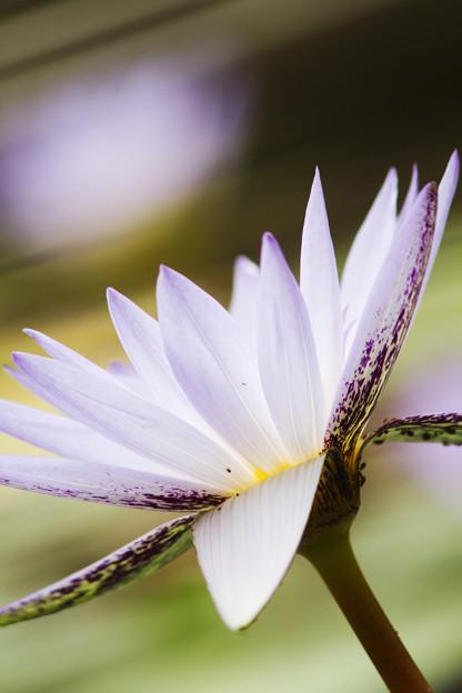 写真: キレのある花