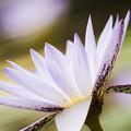 キレのある花