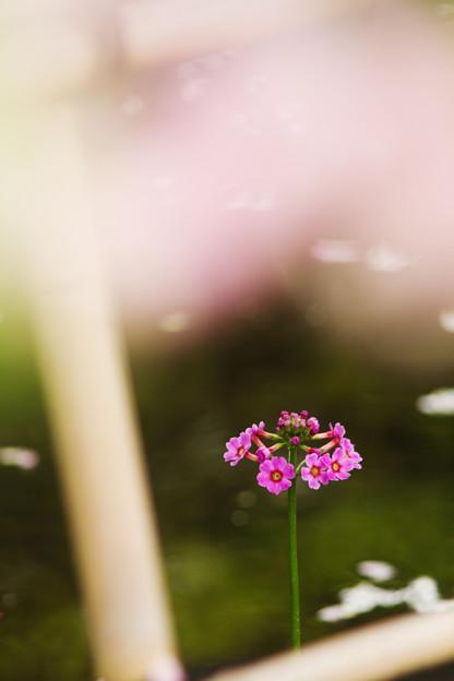 写真: 高山の花