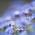 写真: 美しき小花
