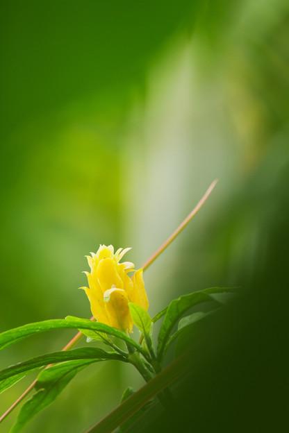 写真: 黄色の赤子