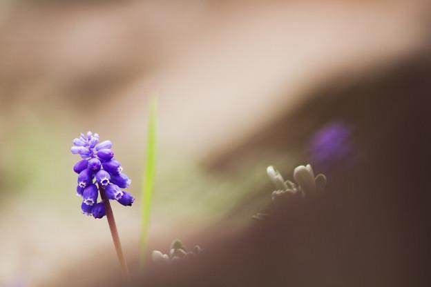 写真: 可愛い紫