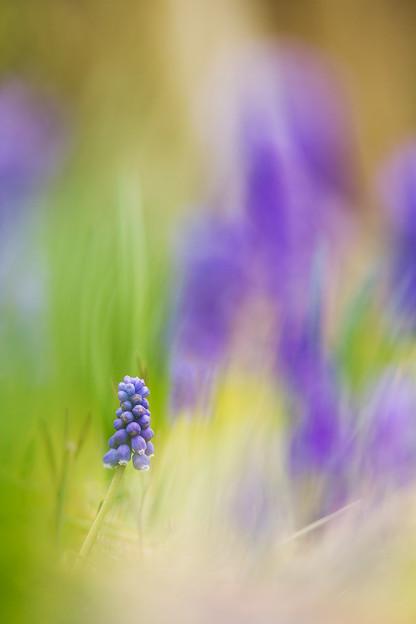 写真: 小さな植物
