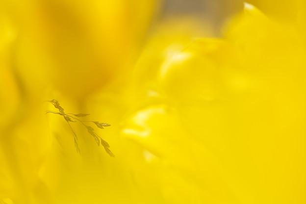 写真: 黄金の世界を見る