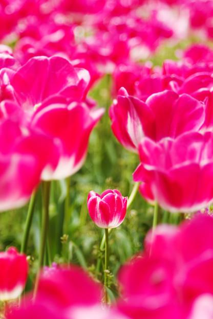 Photos: 育つ花