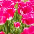 写真: 育つ花