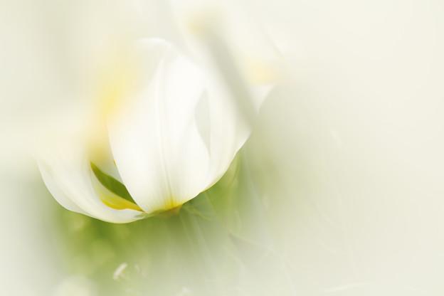 ワンポイントある花
