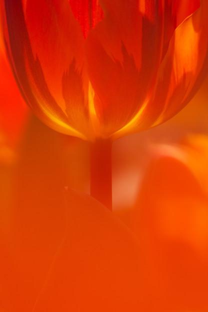 写真: 炎の花