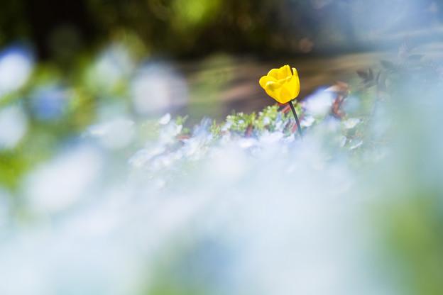 写真: 青い風が吹く花壇