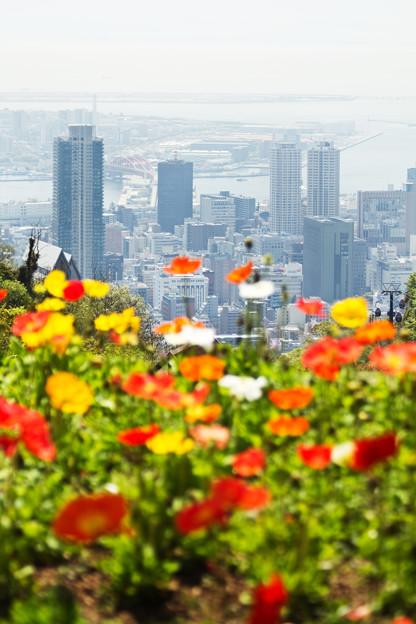 神戸を見る花