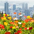 写真: 神戸を見る花