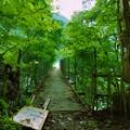 Photos: 大洞川吊り橋入口