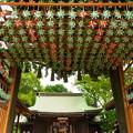 Photos: 川越氷川神社2020-8