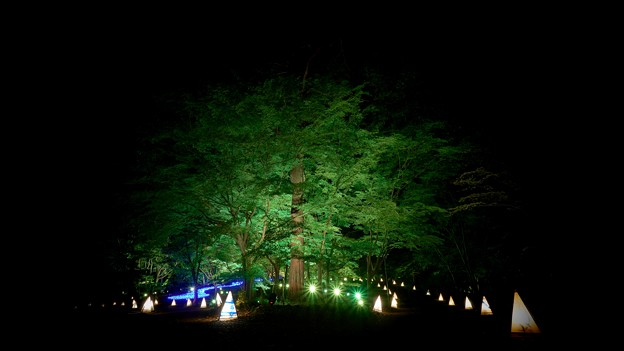 国営武蔵丘陵森林公園-2