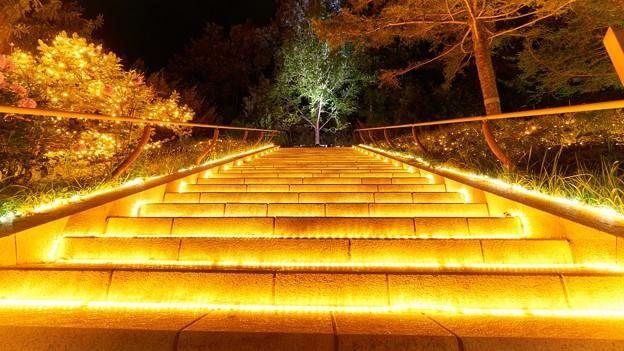 国営武蔵丘陵森林公園-1