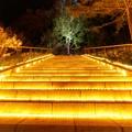 Photos: 国営武蔵丘陵森林公園-1