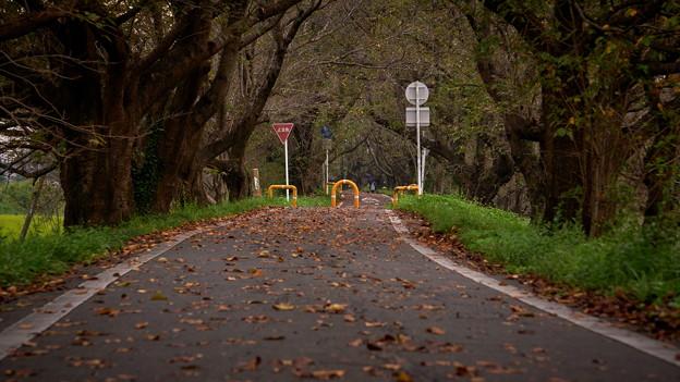 Photos: 秋の道?