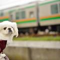 Photos: ワシクリにレオ参上!