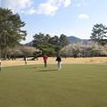 写真: 足利カントリークラブ梅の花をバックに2014.3.23.