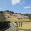 写真: 足利城ゴルフ倶楽部1番ホールの桜