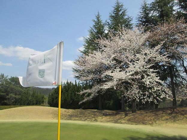 写真: 足利城ゴルフ倶楽部3番Hグリーン奥の桜
