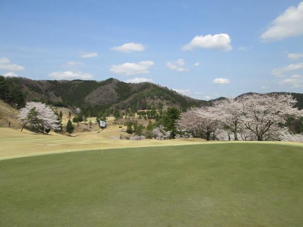 写真: 足利城ゴルフ倶楽部の5番Hグリーン奥から見た桜