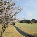 Photos: 足利城ゴルフ倶楽部9番Hセカンド地点の桜