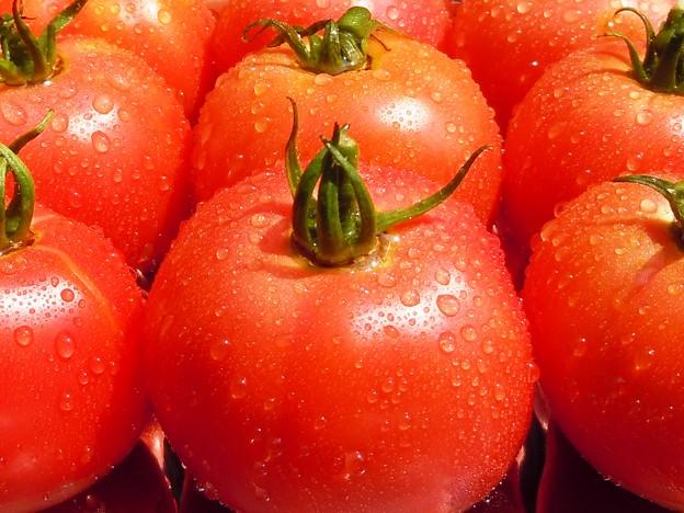 本日の収穫は完熟12個♪ 2012年盛夏