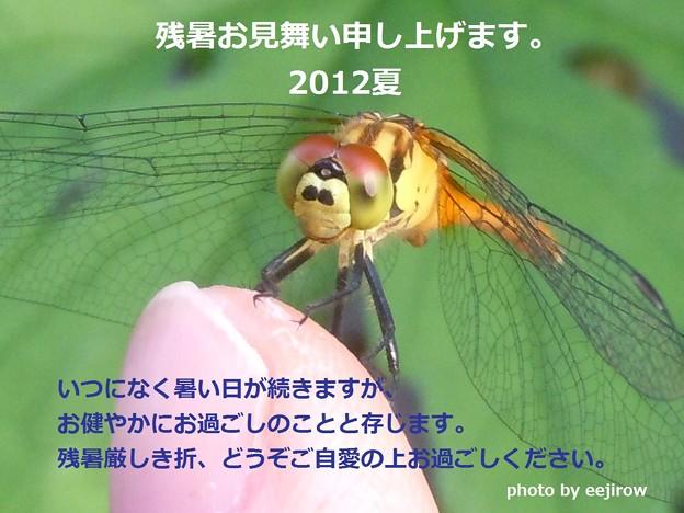 残暑お見舞い申し上げます。2012夏
