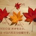 佛通寺の落ち葉たち♪