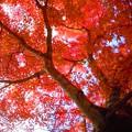 Photos: 紅葉最前線南下中