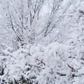 寒~い寒~い雪の朝だ!!