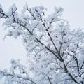 ぶるぶると久々の積雪だ!!