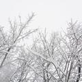 冷たい寒い真っ白な冬将軍がやって来た!!