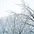 雪降り積る‥‥