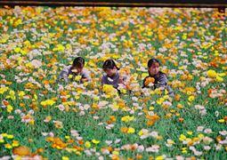 花摘み_002