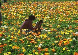 花摘み_003