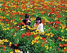 花摘み_004