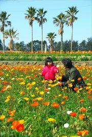 花摘み_006