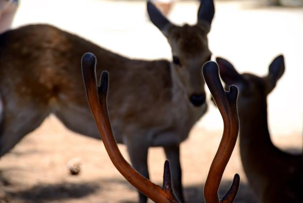 角の背景に2頭の鹿