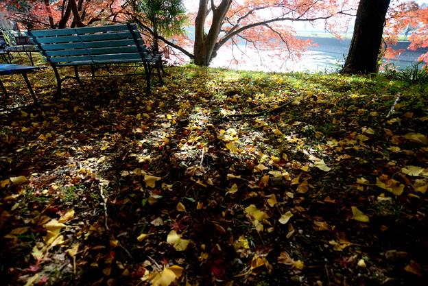 出雲大神宮 池の横の木陰