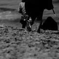 Photos: 鳥取砂丘 馬の背から見る海