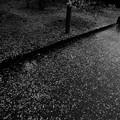 Photos: 春の雨上がり モノクロ