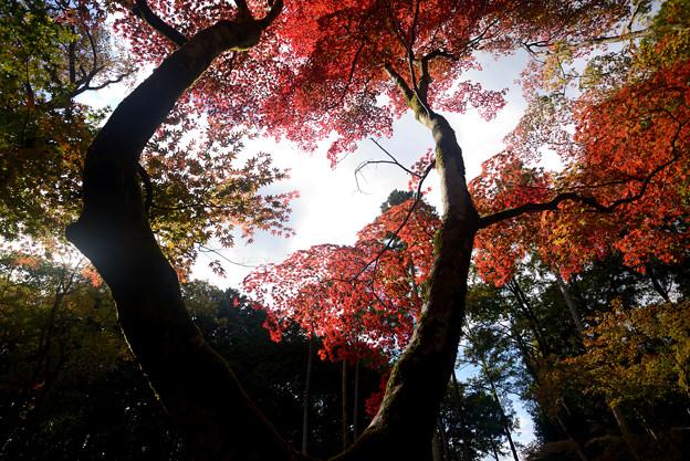 鶏足寺の紅葉02