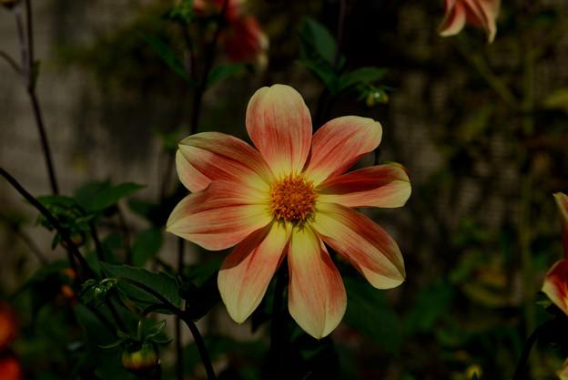 ガーデンミュジアム比叡 ピンクと黄色の花